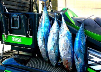 Fishski tuna 39